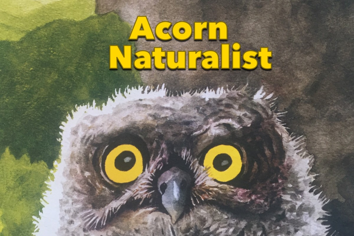 Acorn Naturalists | Homeschool Haul