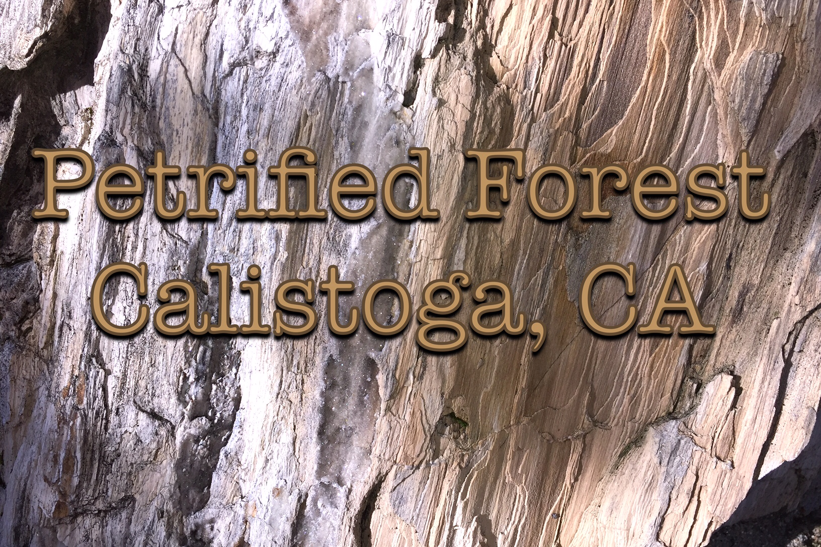 Petrified Forest | Nature Unit