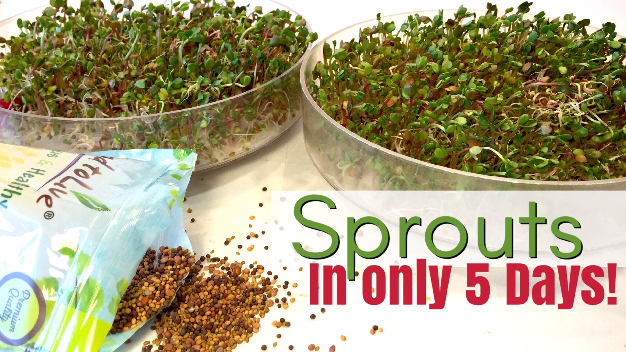 HOW TO GROW SPROUTS FOR BEGINNERS
